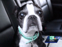 Dog Fall (KCRA-3 / UPI)