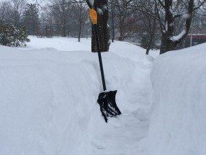 Blizzard '15 Shovel