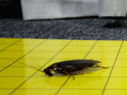 roaches other violations close capitol cafeteria