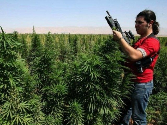 Lebanon-hash-grower-AFP