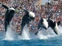 Sea World (AP)