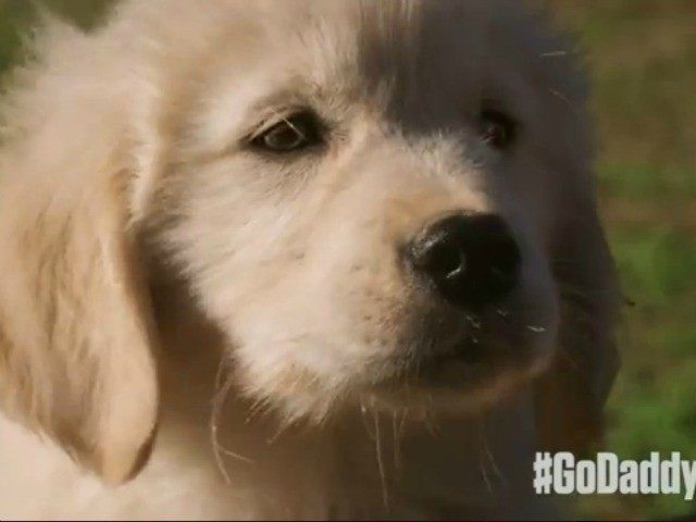 GoDaddy Super Bowl ad cancelled for angering PETA