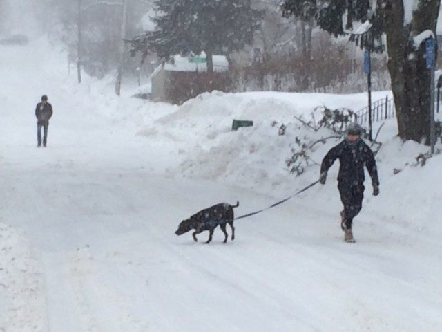 Dog Walker Blizzard