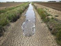 Drought farm (Jae C. Hong / Associated Press)