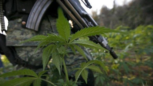 A soldier stands guard among marijuana plants at an illegal plantation found during a military operation on Friday at the Culiacan mountains, northern Mexico, Monday, Jan. 30, 2012. The drought in northern Mexico is so bad that it has hurt even illicit drug growers and their normally well-tended crops of …