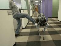 Google Kicks a Dog (Screenshot / YoutTube)
