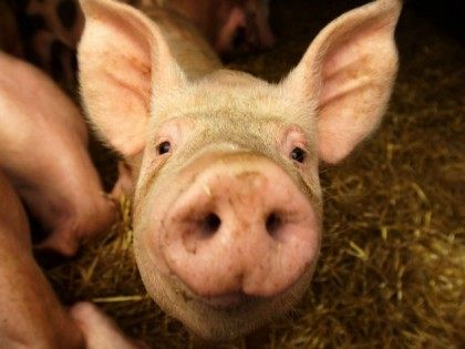 pork-consumption