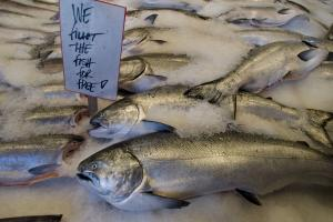 New handheld device to help spot fish fraud