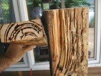 Termites (Voxphoto / Flickr)