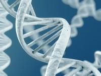 """In what is being dubbed """"the most important new genetic …"""