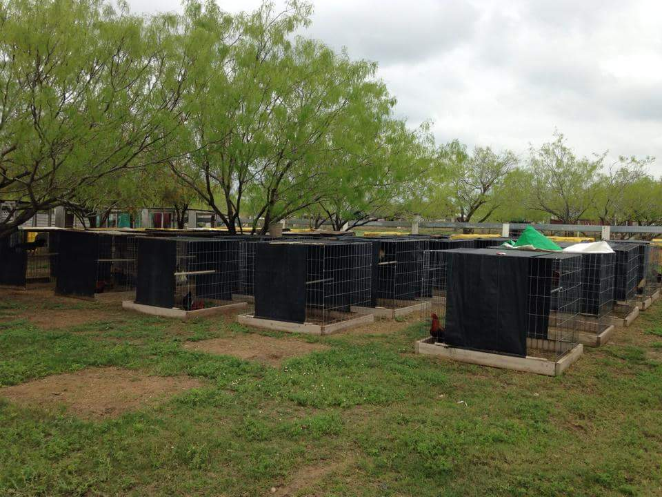 Rooster pens for cockfighting operation near Texas border. Photo: Hidalgo County Sheriff's Office