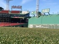 Fenway Outfield Grass