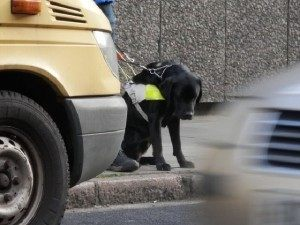 Guide Dog Crossing