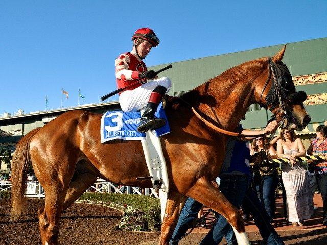 Horse at Santa Anita