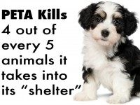 Facebook/Peta Kills Animals