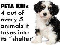 Facebook/Peta Kills Animals