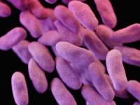 CRE Superbug (Reuters)