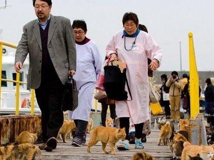 aoshima-cat-island-japan-reuters
