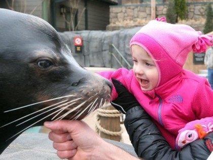 Sea Lion (Bill Greenblatt / UPI)