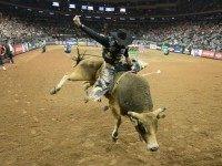 bull-riding-AP