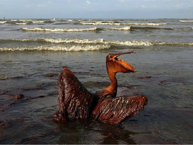 five years on why obama will always cherish the gulf oil spill