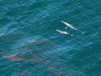 California-oil-spill-ap