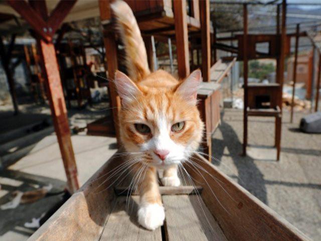 Feral Cat AP