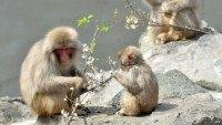 baby_monkey