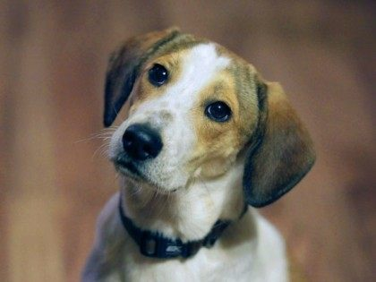 dog-AP