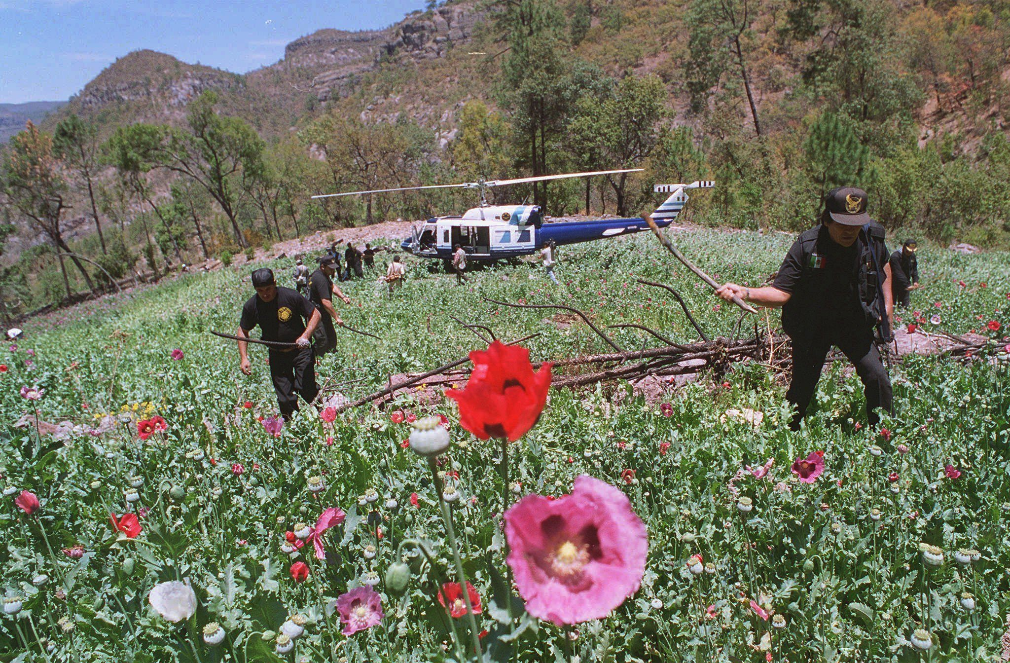 Opium Now Bigger Cash Crop Than Marijuana In Mexico