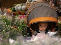 San Francisco baby (Justin Sullivan / Getty)