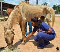 Starving horses 1