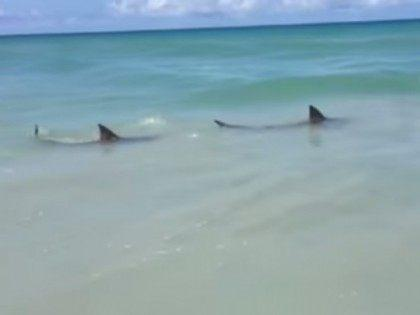 sharks-waveland-beach