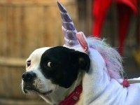 Unicorn dog (Frederic J. Brown / AFP / Getty)