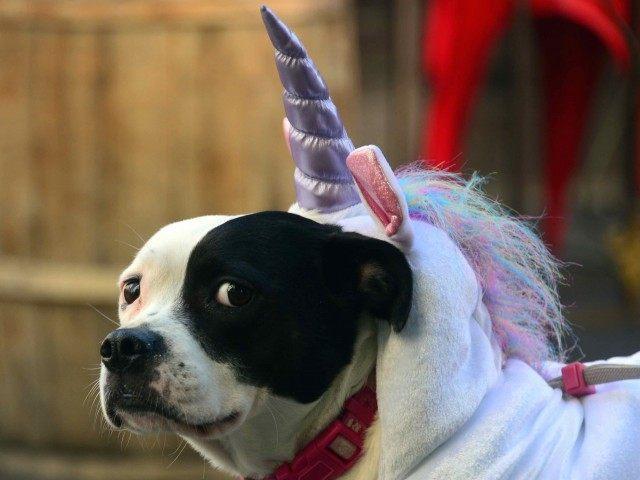 Unicorn dog (Frederic J. Brown / AFP / Getty)