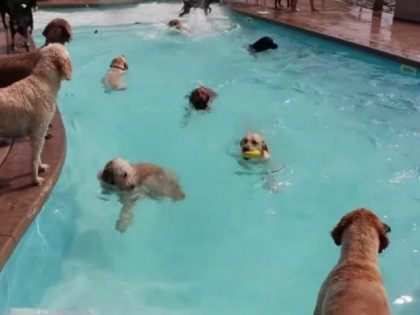 doggie-pool-screenshot