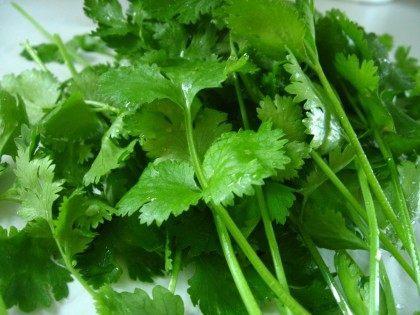 harvested-cilantro