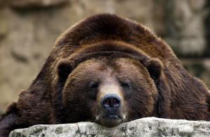 Crude oil shrugs off bear market signs