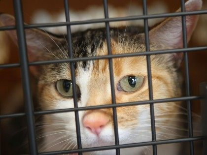 Cat travel (David McNew / Getty)