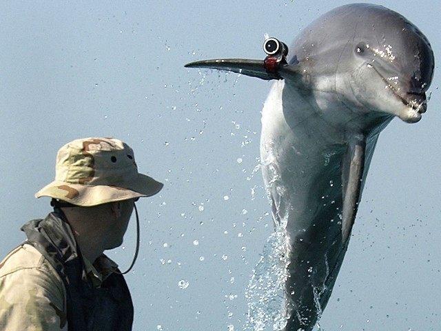Dolphin spy (U.S. Navy / Getty)
