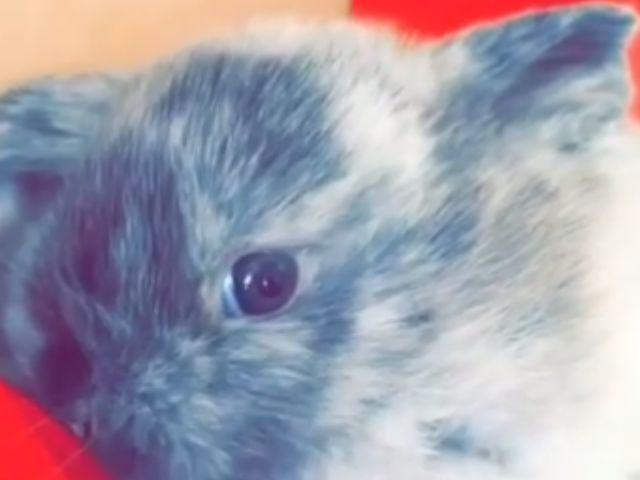 Bruce-Jenner-Rabbit