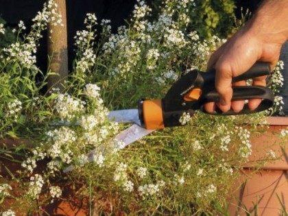 garden-shears-AP