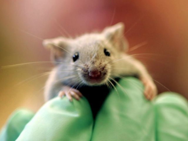 Cancer Vaccine Developed by Researchers Passes Mice Trial