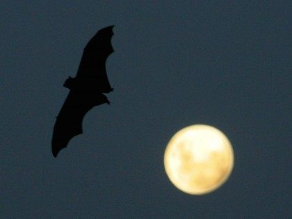Bat full moon (Ian Waldie / Getty)