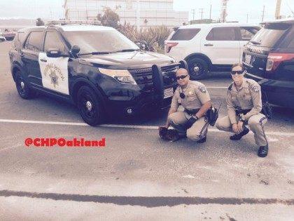 Chicken crossing road (CHP Oakland / Twitter)