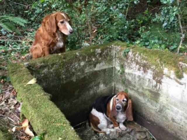 Vashon Island Pet Protectors/Facebook