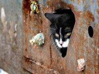 stray cat Sergei Grit Associated Press