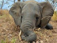 Wildlife Conservation Society via AP