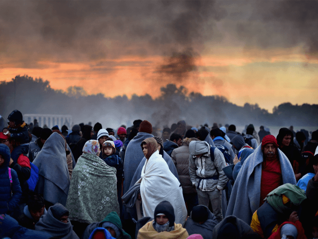 Migrant Activity