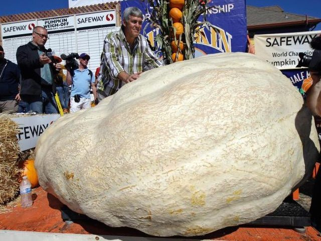 Giant California Pumpkin (Associated Press)